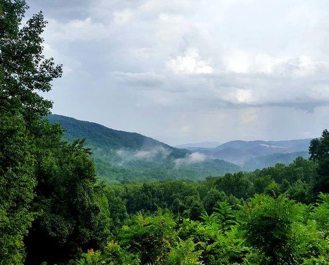great smoky mountains Tree Mountain Tea Crop Forest Tree Area Pine Tree Pinaceae Sky Mountain Range Cloud - Sky Foggy