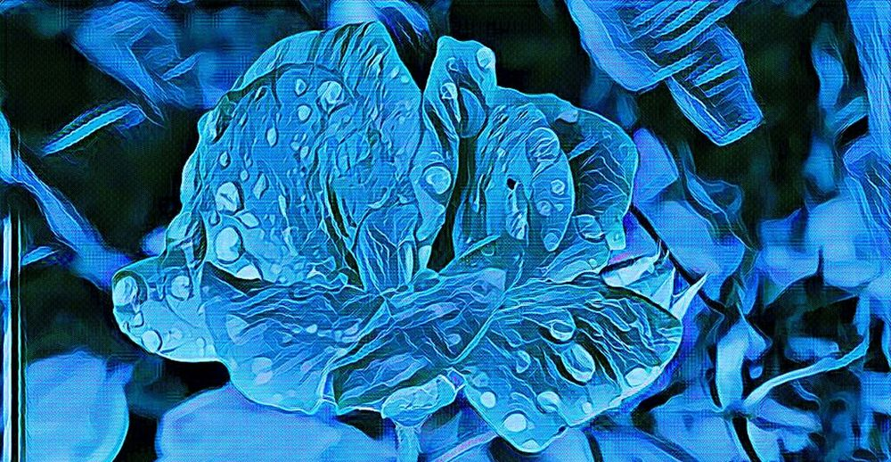 Blue Close-up Horizontal No People Nature Outdoors Day Flower Fine Art Photography Edited EyeEm Nature Lover