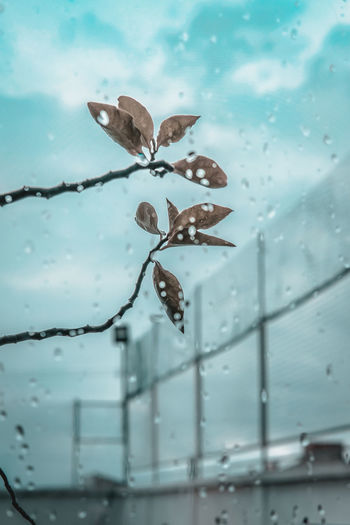 Close-up of raindrops on window during rainy season
