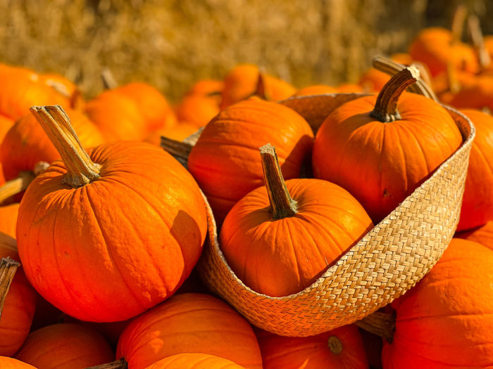 Close-up of pumpkins in market during autumn