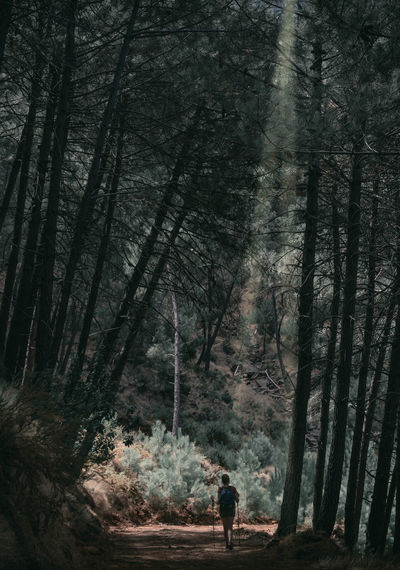 Rear view of woman walking amidst trees in forest