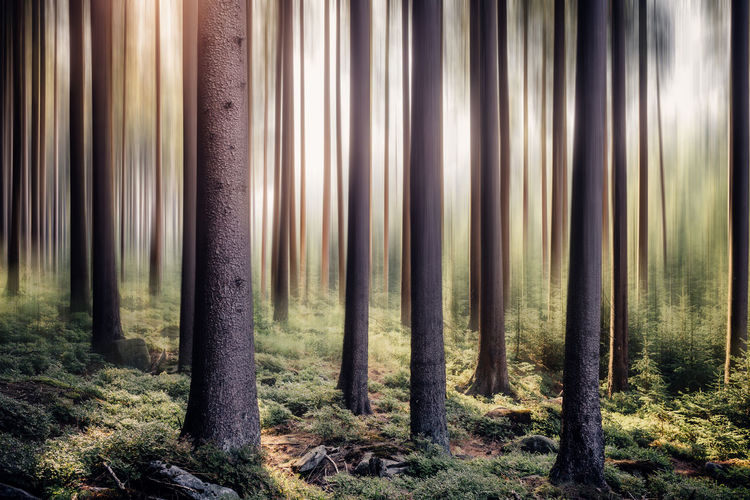 Tree trunks in forest