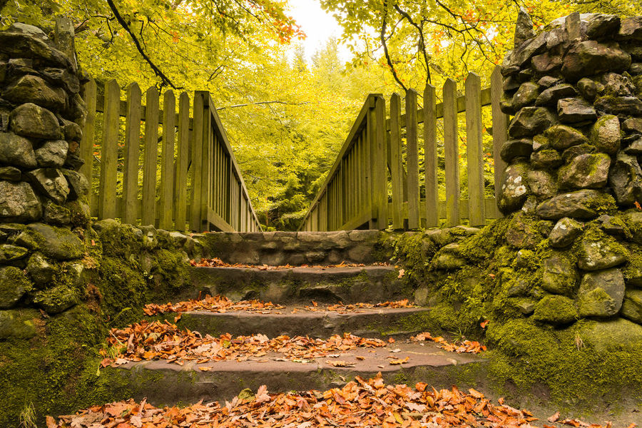Nature Day Outdoors No People Sunlight Growth Yellow Leaf The Way Forward Beauty In Nature Autumn Tree Northern Ireland Tollymore Forest Park Ireland Landscapes Tree Green Color Nature