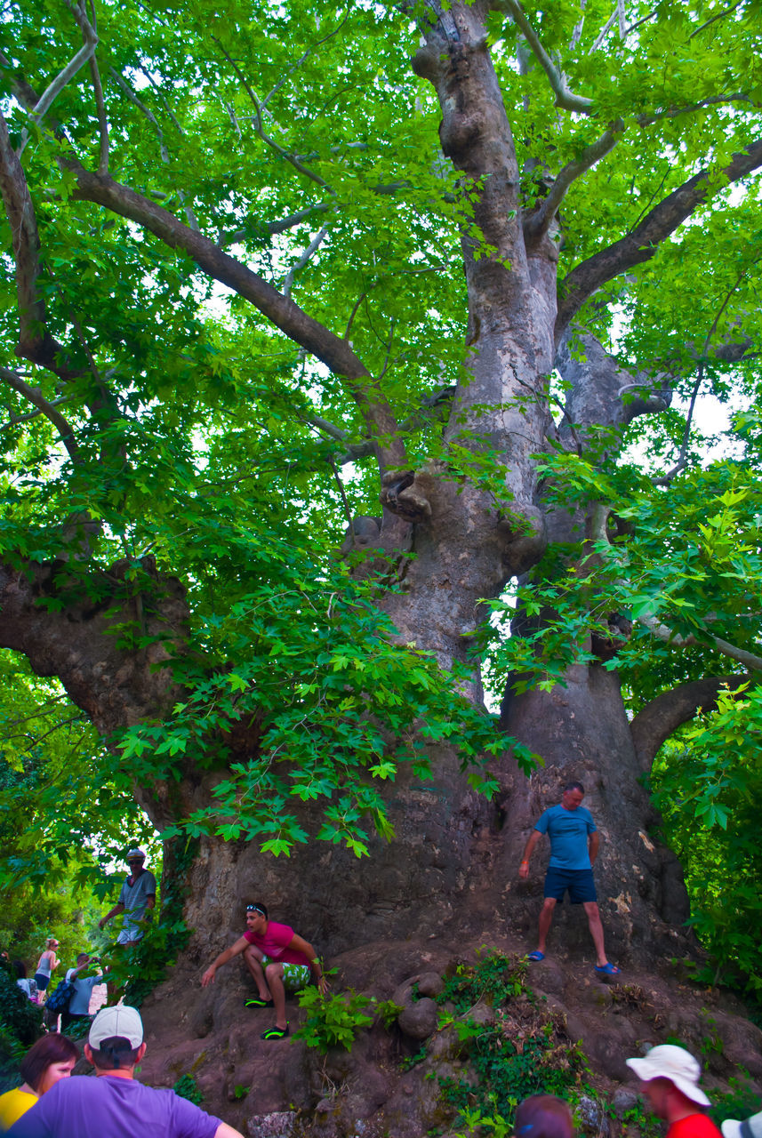 tree, adventure, one person, growth, real people, day, nature, hiking, full length, green color, outdoors, climbing, branch, people, adult