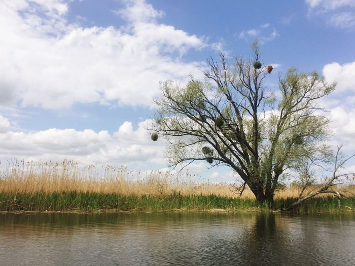Nature Landscape Water Tree Waterfront River Oder Sky Sky And Clouds Clouds And Sky Clouds