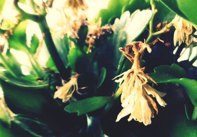Beauty Among The Wilted  Flowers Nature EyeEm Nature Lover