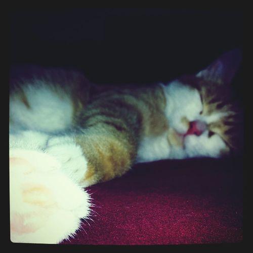 Sleepy Mcdreamy Cats Gameday