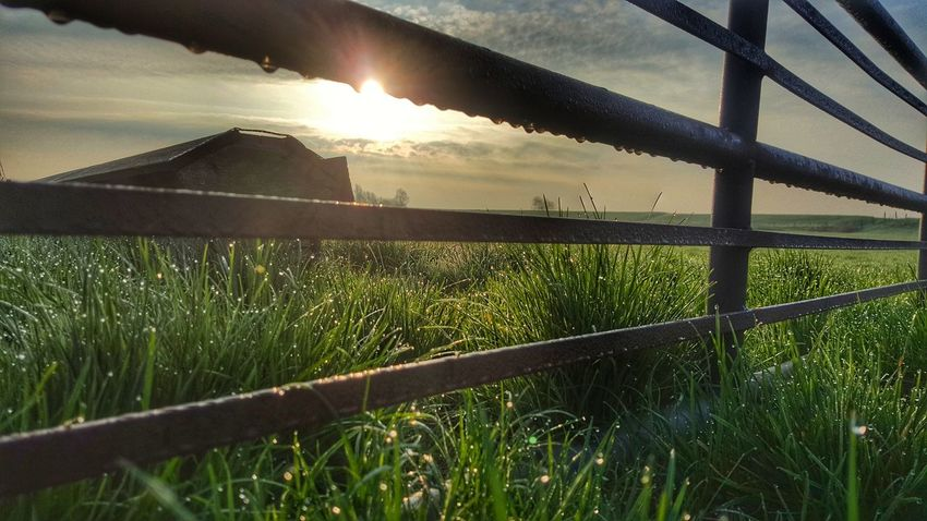 Sunlight Sunset Grass Outdoors Nature Agriculture No People Illuminated Water Sky Day Landscape Groninger Hoogeland Grass Dew Close-up Mobile Photography Drups Field Green Nature
