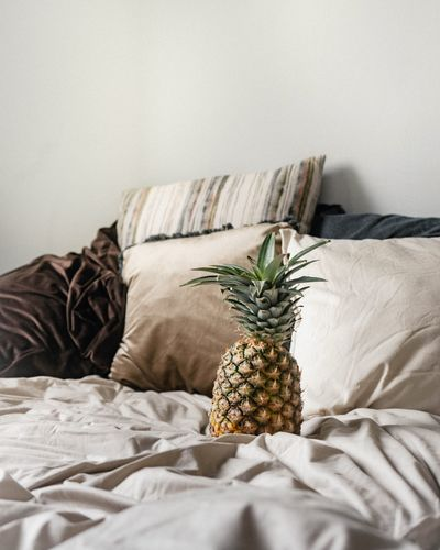 Plants growing on bed at home