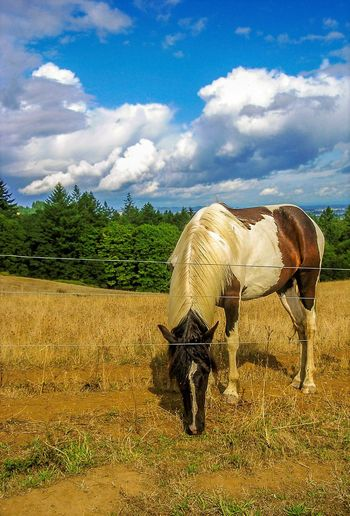Took this one many years ago in Willamette Valley Oregon...beautiful area in NW wine country. Horse Cloud - Sky One Animal Sky Animal Themes Field Domestic Animals Standing Mountain Livestock Outdoors Day Full Length Nature Tree Rural Scene No People Landscape