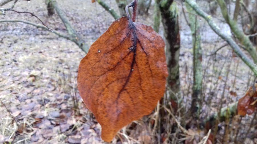 лист дерево