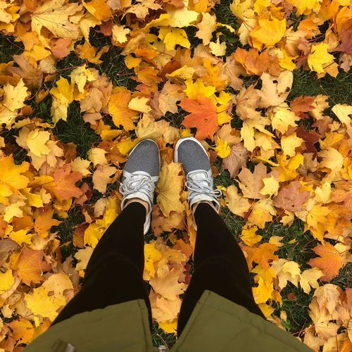 Low section of person standing on yellow maple leaves
