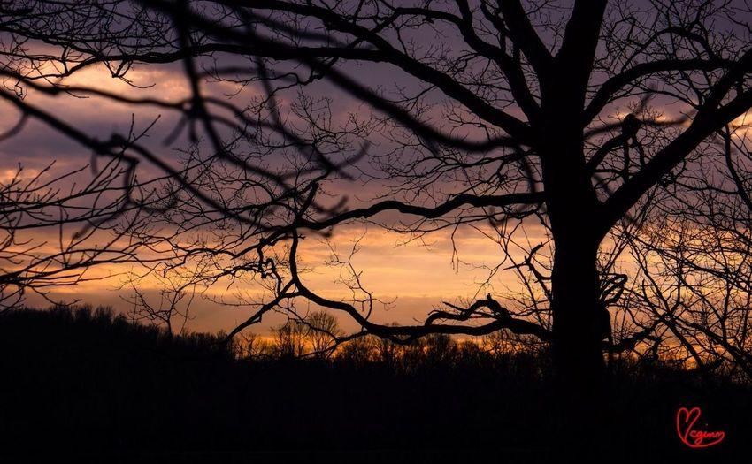 Landscape Forest The Press - Treasure A New Dawn, A New Day