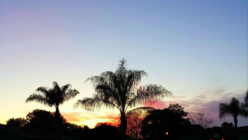 Tropical Sunset! Sunsetting For The Evening Beauty In Nature Outdoors Tranquility No People Silhouette Sunset Silhouettes Queen Palm Trees Beautiful Night Sky EyeEm Gallery EyeEm Cell Phone Photography