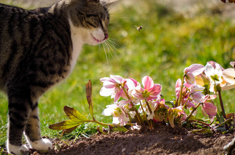 Animal Themes Beauty In Nature Day Domestic Cat Flower Flower Head Fragility Growth Moments Nature No People Outdoors Peaceful Pets Plant