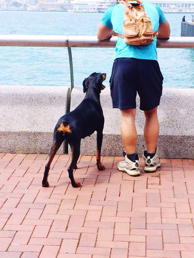 The Photojournalist - 2016 EyeEm Awards A dog and a man enjoying their outdoor experience at the harb outside of Hong Kong Hong Kong Relax Ferry Terminal Hong Kong Central Sunshine ☀ Harbourside Loyalty Sunny Day☀ Waiting Patience Training