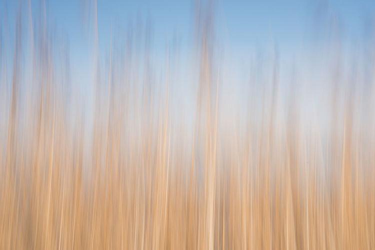 Full frame shot of plants against sky