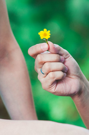 Cropped hand giving yellow flower to person