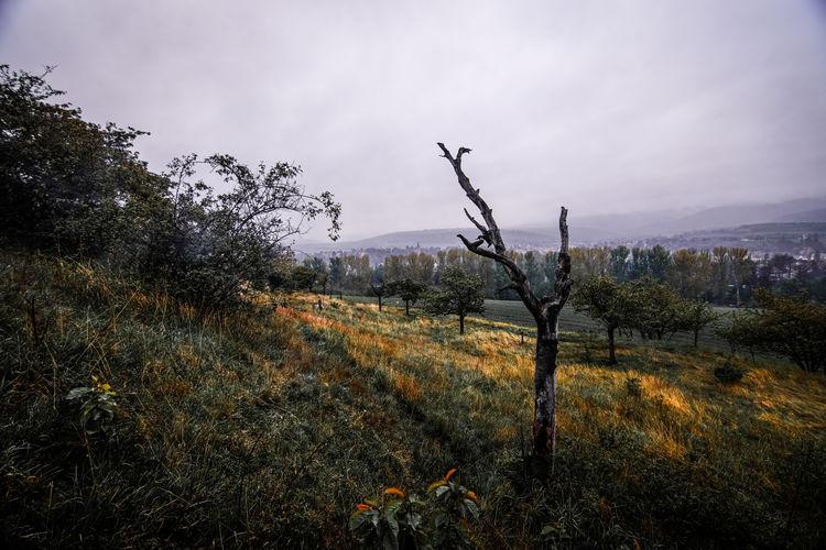 Land Harz