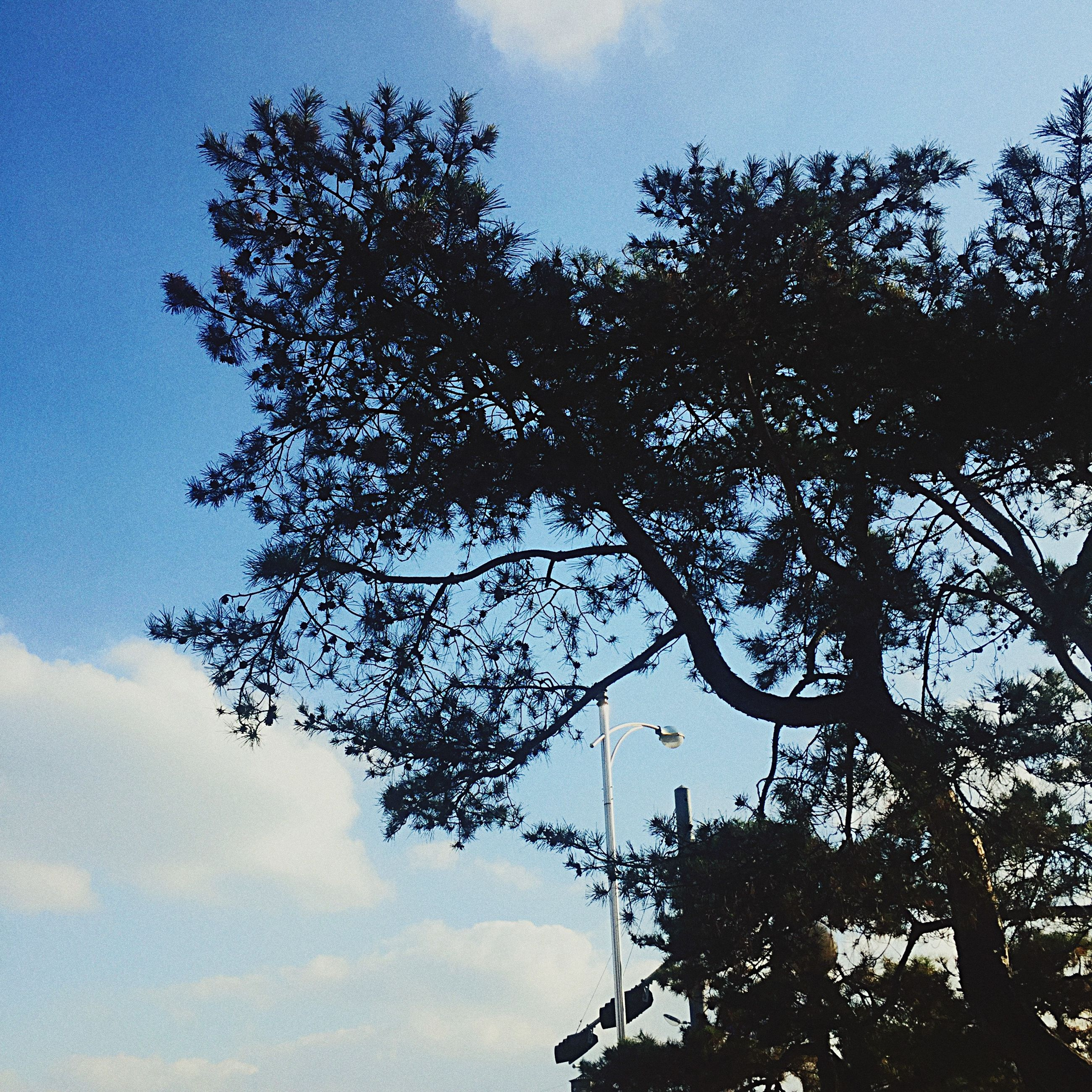 tree, low angle view, sky, branch, tranquility, growth, nature, beauty in nature, silhouette, scenics, tranquil scene, blue, outdoors, sunlight, no people, day, cloud - sky, clear sky, tree trunk, cloud
