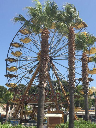 Palms Ferris