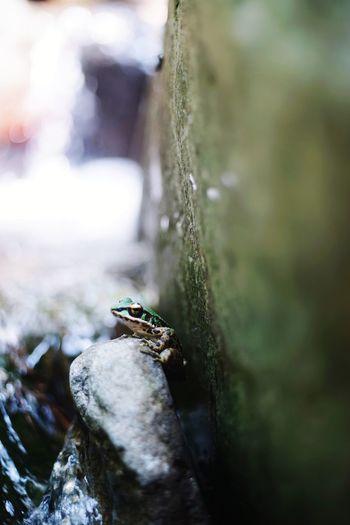 蛙 River View