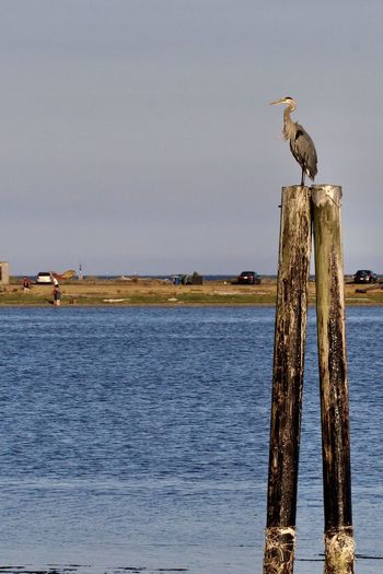 Bird perching on wooden post in sea against sky