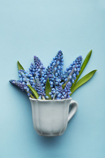 Close-up of blue flower against white background