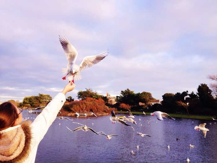 Bird flying over trees