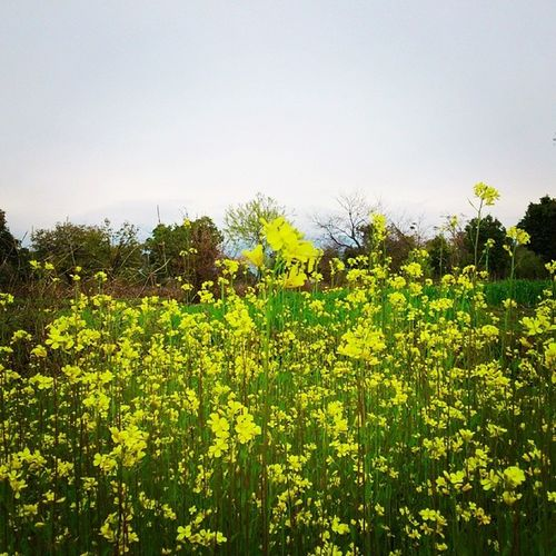 Palampur Greenfield Himachalpradesh Himachalpictures