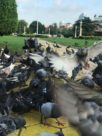 Animal Themes Bird Animals In The Wild Large Group Of Animals Animal Wildlife Outdoors Nature Sky