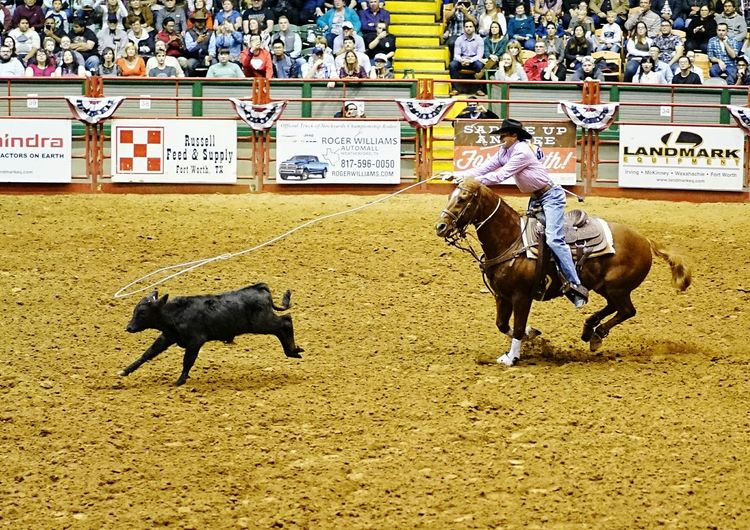Domestic Animals Mammal Horse Livestock Text Real People Working Animal One Animal Day Men Outdoors Occupation One Person Sports Race People Crowd StockyardsChampionship Cowtown Coliseum Fort Worth, TX Cowboy Horse Riding Stadium Audience