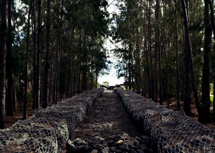 Pathway with flood protection in forest