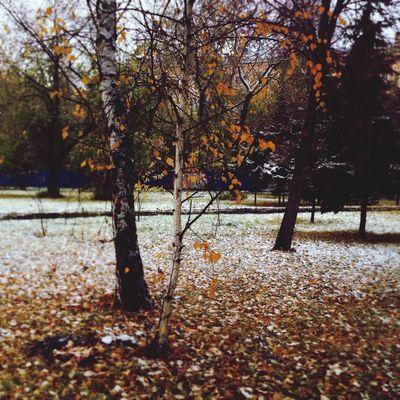 Omsk Природа осень Nature