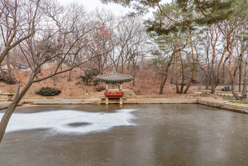 Architecture Bare Tree Beauty In Nature Branch Built Structure Day Drinking Fountain Gyeongbokgung Palace, Seoul Hot Spring Nature No People Outdoors Sky Tranquility Tree Water
