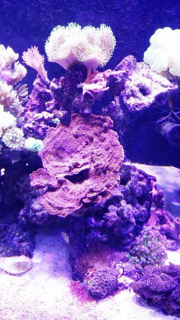 Gpro2 Daliy Zoolungzoolung 산호