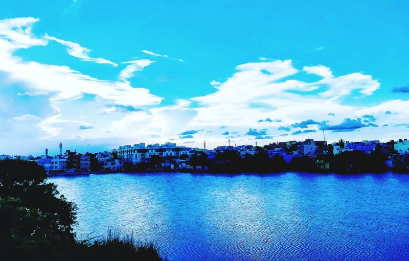 Water Tree Blue