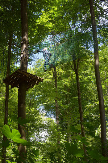 Tree top adventure Adventure Beauty In Nature Beech Forest Branch Challenge Climbing Denmark Experience Forest Forest Adventure Fun Green Color Growth Leaf Leisure Activity Lifestyles Low Angle View Nature One Person Outdoors Tree Tree Top Tree Top Adventure Tree Trunk Treetop