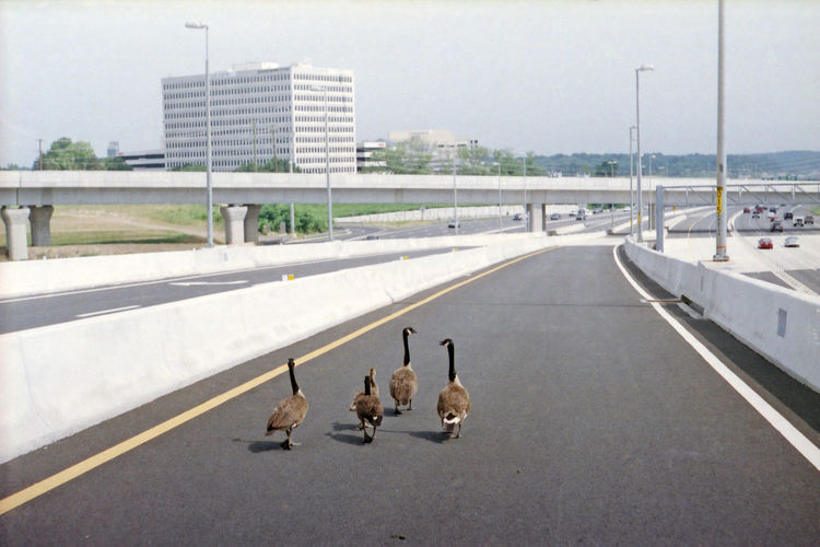 View of birds on road in city
