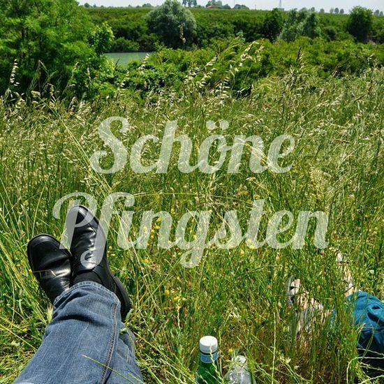 Schöne Pfingsten euch allen - nutzt die Sonne 😄👍Aurich Radtour Pfingsten2015 Pfingsten Grün Gras  Natur