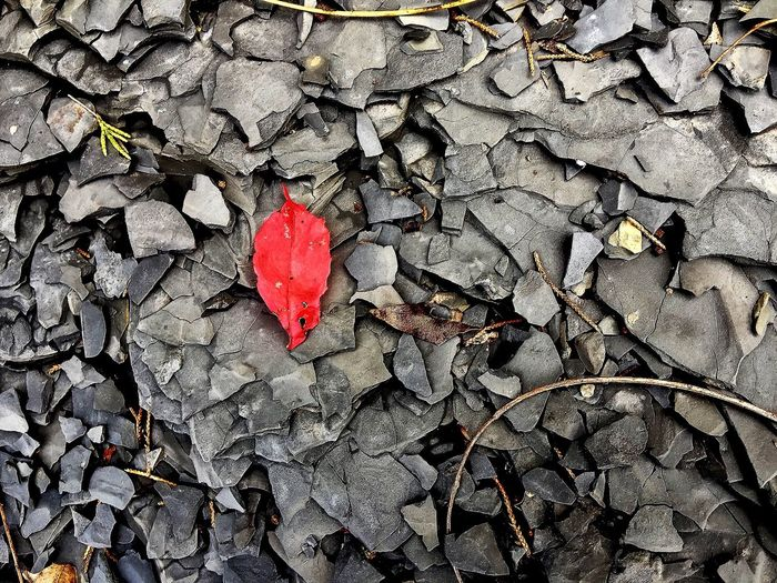 Red Autumn Leaf Nature