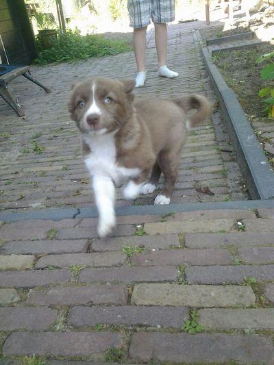 My Puppy, Love Her.