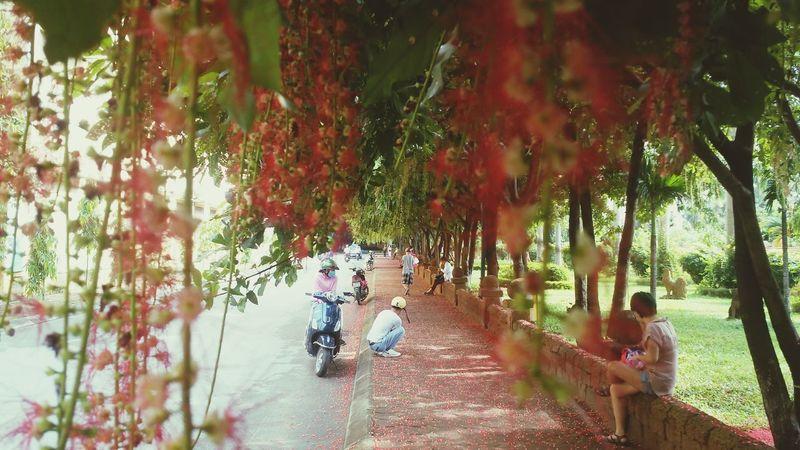 Con đường tình yêu Con đường Tình Yêu Hoa Men Women Bicycle First Eyeem Photo