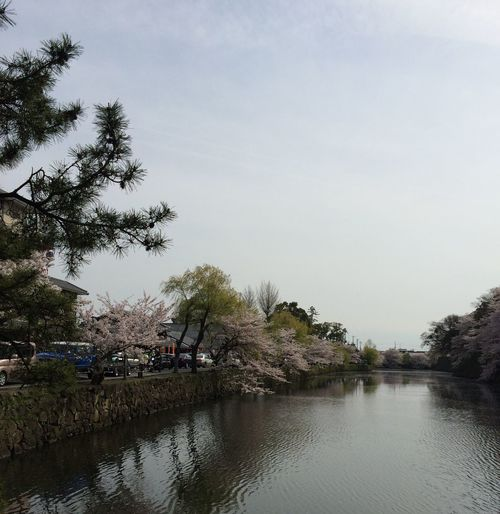 Beautiful Hikone #sakurafestifal #cherryblossom #perfectweather #Japan #lakeview