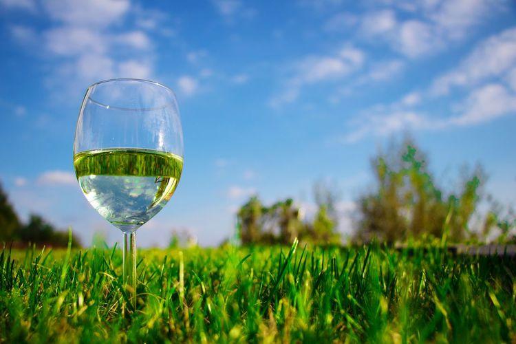 Green field seen through glass