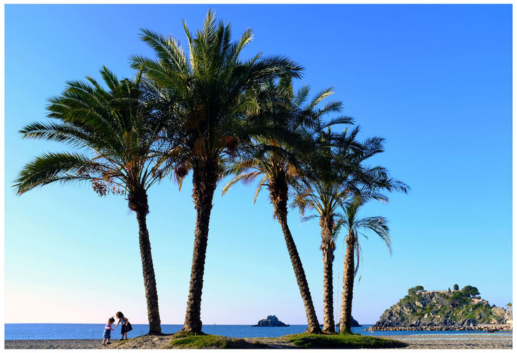 Palm trees by sea against clear blue sky