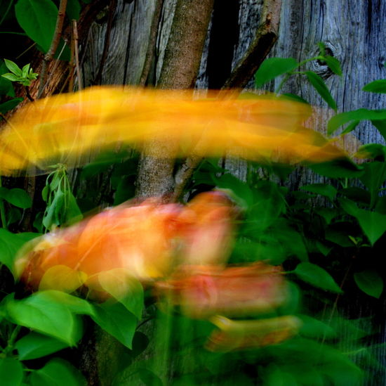 Plants Animal Themes Beauty In Nature Blurred Motion Close-up Colour Movement Colour Of Life Day Fragility Grass Leaf Motion Nature No People Outdoors Plant Swimming Wind Motion