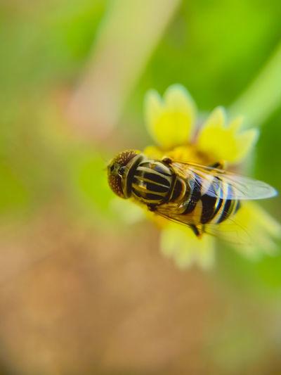 Bee Defocused