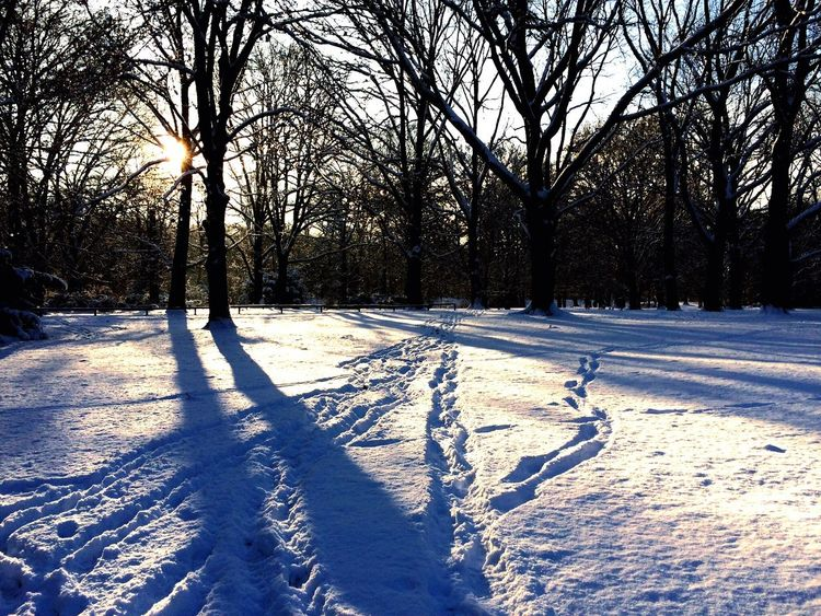 Winter In The Park Wintertime Winter Sun Sunlight Sunlight ☀ Tiergarten GERMANY🇩🇪DEUTSCHERLAND@ Germany Berlin Photography Berlin Berliner Ansichten Berlincity My Berlin  Berlindubistsowunderbar Berlintagundnacht Berlinphotography Berlinphotos Winterwonderland Winter Trees Winterscapes