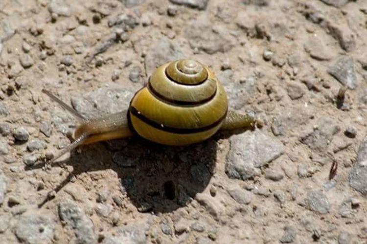 One Animal No People Snail Animal Shell Nature Animal Wildlife Close-up Shadows